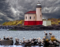 Coquille Lighthouse Pelican Refuge