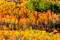 Steens Mtn Fall Colors 3