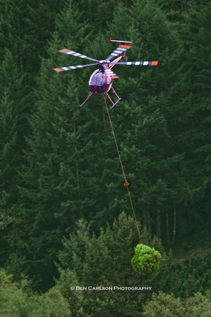 Helicopter Christmas Tree Harvesting